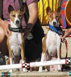 Basenji Mach and Pach titlists