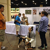 Basenjis meet public in Florida