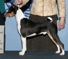 Photo first grand champion basenji