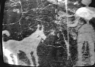Basenjis in ancient cave painting