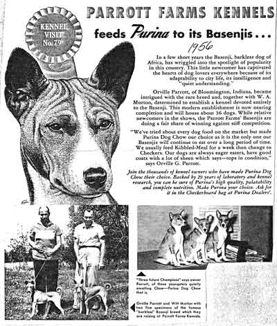 Advertising with Basenji